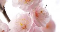 薬に頼らないで花粉症を改善させる方法【瞳子先生の人生相談】第13回
