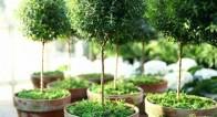 冬のベランダ菜園!初心者でも成功するハーブの種類と育て方