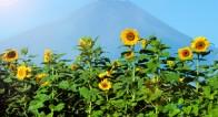 冷房を使わないで「涼しさ」を感じるには?日本の夏の涼みかた4選