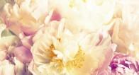 【4月30日から5月4日】古くから女性の恋愛運とココロを支えてきた花とは?