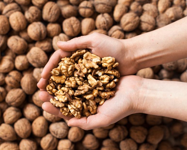 Handful of walnuts kernels