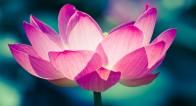 【7月のパワースポット】花見ならぬ「蓮見」で縁結びパワーを!