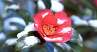 心をあたためる。冬に咲く山茶花が教えてくれること【11月7日〜11日】