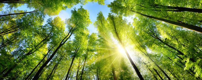 環境改善にも貢献するモリンガ